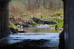 Red Hill Creek