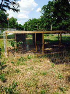 Chicken coop ideas 2015