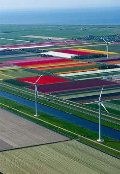 The #Netherlands fields of tulips