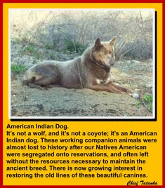 Native American Proverb, Native American Wisdom, Native American History, American Indian Dog, Native American Images, American Indians, Rare Animals, Funny Animals, Navajo People