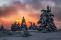 New Wallpaper, Nature Wallpaper, Android, Winter Trees, Winter Wonderland, Landscape Photography, Cool Photos, Around The Worlds, Outdoor