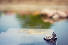 turtle Turtle Love, Baby Turtles, Sea Creatures, Adorable Animals, Art Photography, Spaces, Eye, Pretty, Turtles