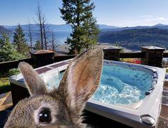 Armstark wünscht frohe Ostern! 😊 Stark, Animals, Happy Easter, Animales, Animaux, Animal, Animais