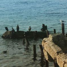En güzel mutfak paylaşımları için kanalımıza abone olunuz. http://www.kadinika.com Günaydın  hafta sonuna bir kala hali  #goodmorning  #sea #birds & #morning mode  #blue #nature #naturelovers #naturepics #travelpics #travel #photography #picoftheday #instagram #instabirds #istanbul #foodie#foodblogger #vsco #vsconature  #fotografvakti #fotografheryerde #gulumseaska #severekcekiyoruz #mutfakgram #gramgece #hayatburada #landscape