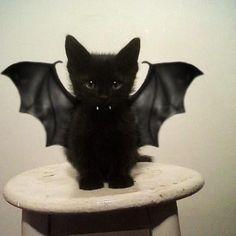 Catman Begins