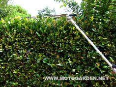 Tagliasiepi AMA MCH600 multifunzione, braccio lungo, barra di taglio regolabile in più posizioni.  Ottimo per il taglio in parete e siepi molto alte.  Il gruppo di taglio è costruito in lega di magnesio, leggero e robusto. Le lame sono doppie.