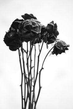 Wilting Flower Tumblr