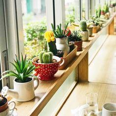 Benefits of Growing Marigolds Succulent Care, Succulent Pots, Succulents Garden, Indoor Succulents, Cactus Plants, Interior Window Shutters, Interior Windows, Diy Interior, Home Decor Kitchen