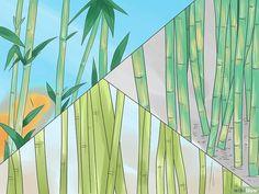 Comment faire pousser des bambous: 18 étapes