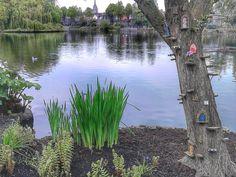 Blessington Basin, Dublin City. Fairy Tree, Dublin City, Basin, Catholic, Country, Street, Places, Life, Ireland