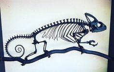 Chameleon skeleton - Helen Kairo