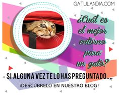 ¿Cuál es el mejor #entorno para un #gato?