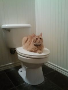 You want to what in my throne?! cute cat