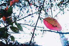小さい秋見つけた 日本中の公園がカラフルで美しい季節になってきました #park #shinjuku #gyoen #秋 #travelgram #travelblogger #traveljapan #sunny #tokyo #sunday #walk #sundate #Autumn #leaf #leaveschanging