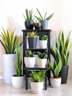 Easy and Fun Tips for Designing Your Indoor Garden living ro.- Easy and Fun Tips for Designing Your Indoor Garden living room Easy and Fun Tips for Designing Your Indoor Garden living room - House Plants Decor, Garden Plants, Potted Plants, Cactus Plants, Greenhouse Plants, Silk Plants, Vegetable Garden, Garden Living, Home And Garden