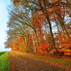 http://augenweide.deviantart.com/art/waiting-for-autumn-556077677