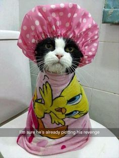 21 Funny Animals For Your Happy Day!