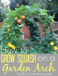 I've been growing squash on my homemade squash arch for a few years now, and I love how it looks. The squash arch makes a gorgeous addition to my vegetable garden, and I get tons of compliments on it. I've also shared my design with you so you can build y Vertical Vegetable Gardens, Backyard Vegetable Gardens, Veg Garden, Vegetable Garden Design, Garden Trellis, Edible Garden, Outdoor Gardens, Garden Tools, Vegetable Ideas