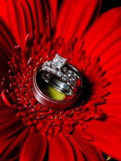 Maine Wedding Photography, unique creative modern romantic, LAD Photography, wedding rings on red gerbera daisy
