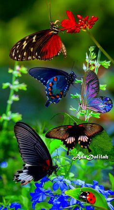 Butterfly Artwork, Butterfly Dragon, Butterfly Wallpaper, Butterfly Flowers, Flower Art, Beautiful Butterfly Pictures, Beautiful Butterflies, Beautiful Birds, Animals Beautiful