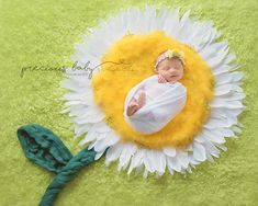 Beautiful newborn baby girl wrapped sleeping in a yellow Daisy with feathers for petals. smile smiling Precious Baby Photography by Angela Forker New Haven Fort Wayne Indiana unique Baby ImaginArt baby scenes