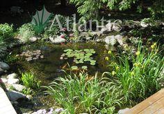 Galleries | Pond | Atlantic Water Gardens
