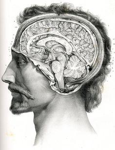 Coupe de l'encéphale sur le plan médian by Center for Image in Science and Art _ UL, via Flickr