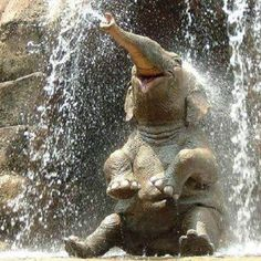 This cute baby elephant  looks like it is having fun.