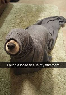If you like funny dog memes, you've come to the right internet location. These are the 100 funniest dog memes of all time. Funny Animal Jokes, Funny Dog Memes, Cute Memes, Cute Funny Animals, Funny Dogs, Cute Dogs, Funny Puppies, Hilarious Jokes, Cute Animal Humor