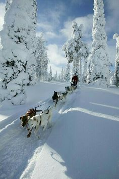 A winter wonderland with dog-sledding in Lapland, Finland. What a fun travel experience this would be! And I've always been curious about visiting Lapland and Finland. Think I'll add it to my winter travel bucket list. Winter Szenen, Winter Magic, Winter Christmas, Minimal Christmas, Father Christmas, Christmas 2014, Christmas Snowman, Simple Christmas, Christmas Trees