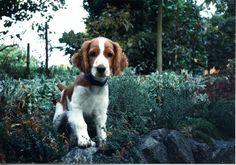 My little puppy, Parker
