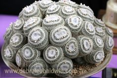 Mammillaria microthele, photographed at the annual Cactus & Succulent Society Show at the Los Angeles Arboretum by Debra Lee Baldwin and posted on her blog, www.gardeninggonewild.com
