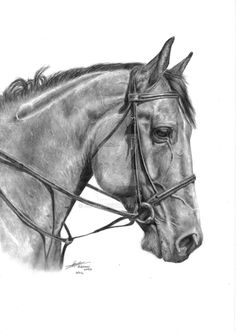 Tia by Siokia on DeviantArt Horse Head Drawing, Horse Pencil Drawing, Realistic Pencil Drawings, Art Drawings For Kids, Horse Drawings, Animal Drawings, Stippling Drawing, Horse Sketch, Horse Artwork