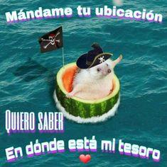 Cute Love Memes, Funny Love, Memes Do Momento, Memes Lindos, Romantic Memes, Dankest Memes, Funny Memes, Tumblr Love, Love Phrases