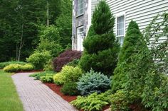 Because they keep their foliage all winter, low-growing evergreens are perfect for planting around your foundation to hide it all year. Description from pinterest.com. I searched for this on bing.com/images