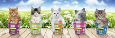 Poster 30x90cm: Keith Kimberlin - kittens out in the flowers. Betsel 'm nu @ reindersshop.com!