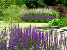 garden landscaping with prairie planting for garden in Leeds