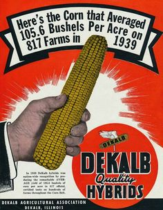 Dekalb advertisement Farm Projects, Metal Projects, Vintage Farm, Vintage Signs, Dekalb Seed, Popcorn Seeds, Crop Protection, Farm Signs, Farm Yard