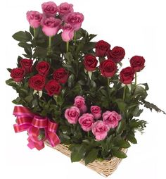 Alborada Beautiful floral composition made ​​with two dozen fresh roses greenhouse in steps, accompanied by hints of ruscus leaves . http://www.compraleflores.com/tienda/product_info.php?cPath=21_id=472