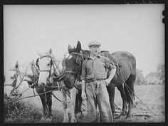 Farmer and team near Frederick, Maryland; Photographer Edwin Rosskam, 194