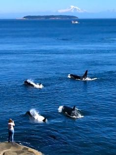 Wish I was there sitting on the rocks watching them( Orca's ) swim by!!!