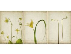 Early Spring by JudyStalus at #etsy