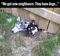 We got new neighbors, they have dogs