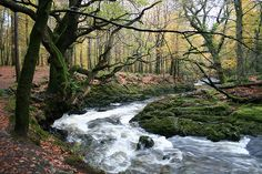 slow forest water by flowcomm, via Flickr