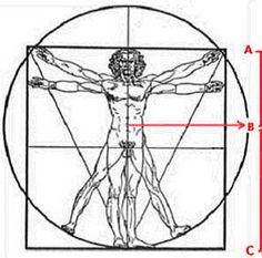 De Gulden Snede: Het Menselijk Lichaam - Plazilla.com Geometry Art, Sacred Geometry, Patterns In Nature, Textures Patterns, Golden Mean Ratio, Aesthetic Theory, Fibonacci Golden Ratio, Circle Game, Roman Art