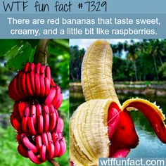 Red Bananas - That taste like raspberries...I might actually try these. Otherwise, totally hate bananas!