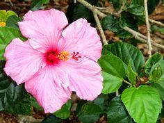Selby Botanical Garden, Sarasota, Florida