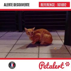 09.09.2016 / Chat / Angoulême / Charente / France