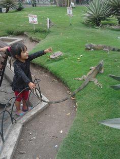 Domenica #Parque_de_las_iguanas/Guayaquil-Ecuador