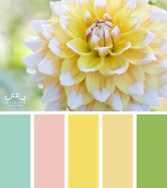 Color Inspiration  Look my first palette! I made it for funzies. Maybe I'll do some more.